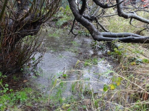the outer bogsy woods, deeper than I have ever seen water here.