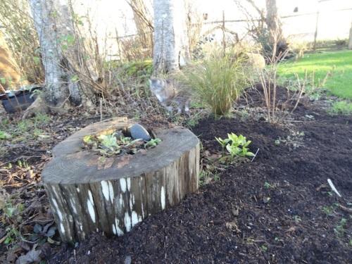 bogsy mulch