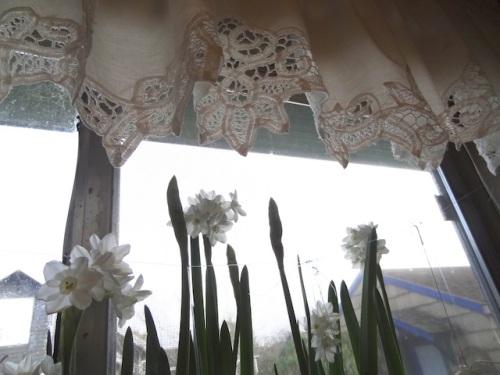 paper whites in kitchen window