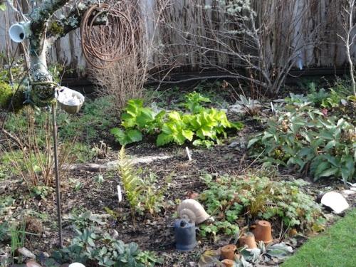 Acanthus 'Hollard's Gold' aglow in the garden
