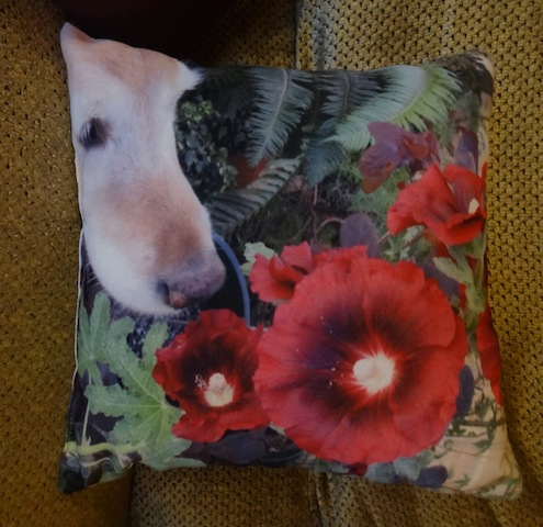 a photo pillow of my good friend Ralph