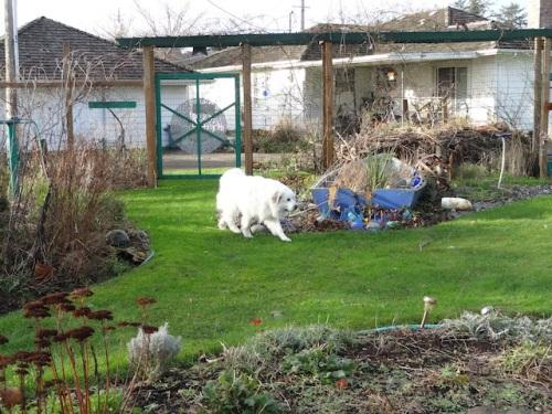 Bella had a good time exploring in the fenced garden.