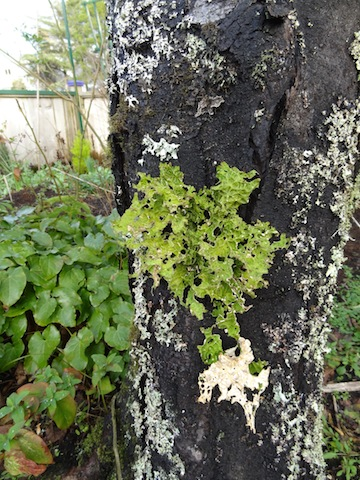 some lichen? for Mr Tootlepedal
