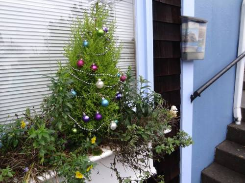 Susie's windowbox