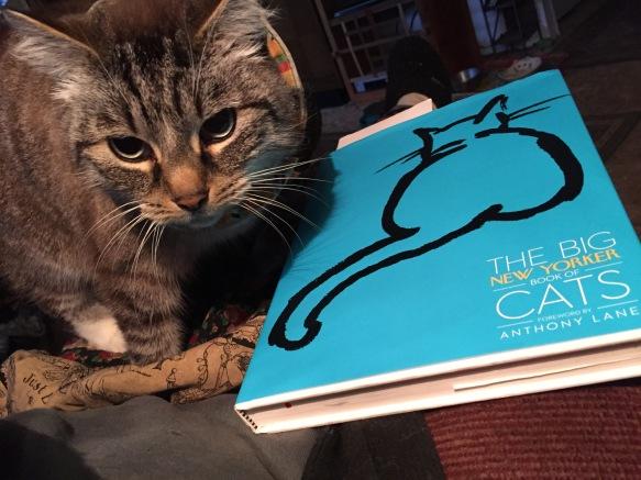 catbooksny