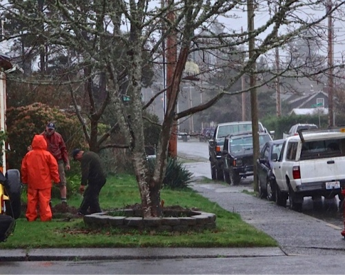 Allan's photo: Down the street, Chris (creator of great Halloween displays) and friends were planting a tree in the rain.