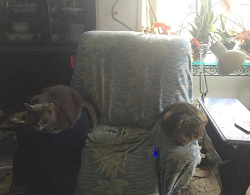 Smokey and Mary kept me company.