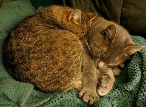 cats5.jpg