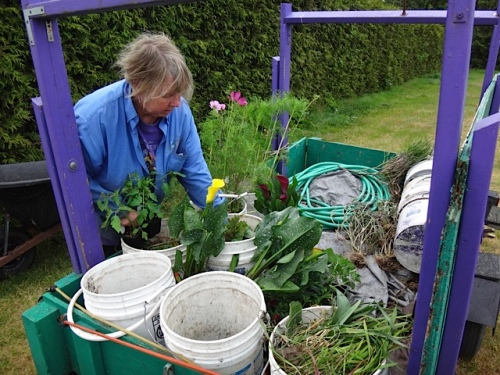 sorting out and burbling plants in the pasture next to Diane's