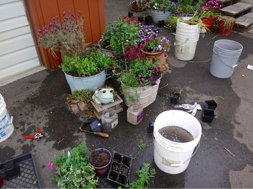 meanwhile....the planting of annuals in pots (Allan's photo)