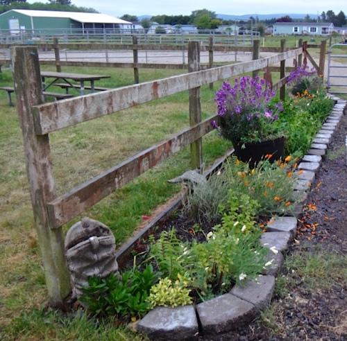 Red Barn garden has seven barrels in all.  (Allan's photo)