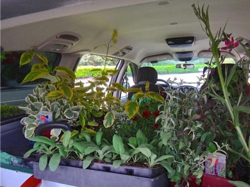 a van full again (Allan's photo)