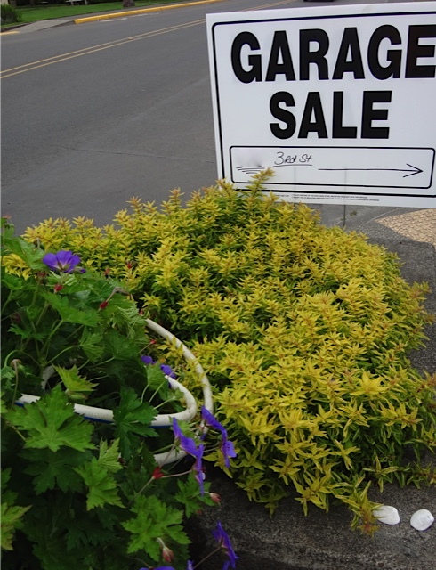 "Garage sale signs were already appearing. We do prefer ones like these with wire ""feet"" that don't mash the plants."