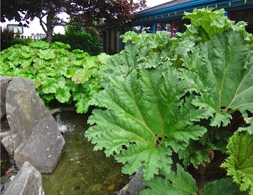 Fifth Street Park, southeast corner (Allan's photo) with gunnera