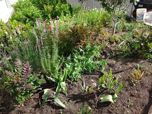 Community Building garden