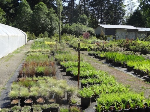 ornamental grasses, daylilies and more at The Planter Box