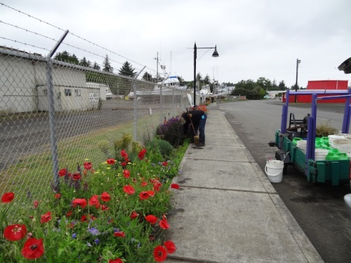 sweeping up after an hour and a half of planting and weeding at the boatyard