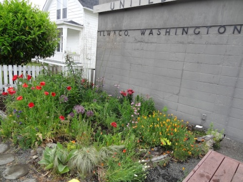 Ilwaco post office garden