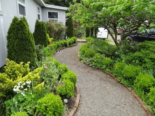 I still have not trimmed the boxwoods because I would like them to get bigger and meet.