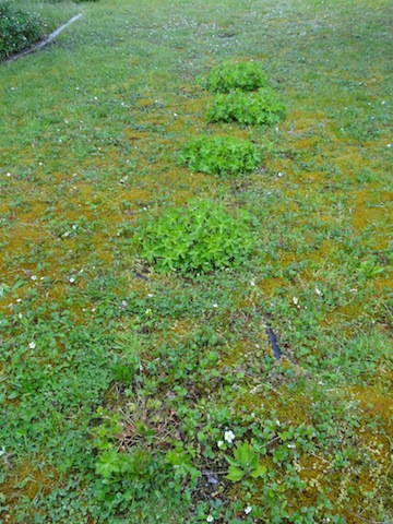 partially mowed Rozanne river