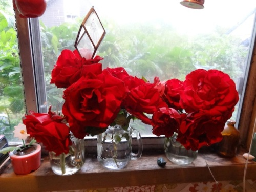 red velvet roses on our kitchen windowsill