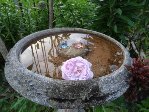 and to float in my mom's birdbath
