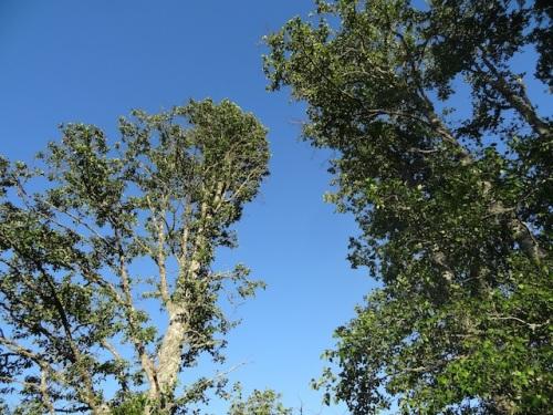 overhead: blue evening sky