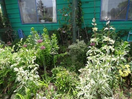 front garden before...
