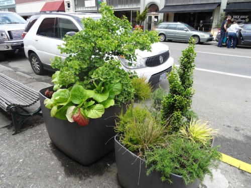 I wish I knew where these planters were acquired. They are handsome and not very sittable.