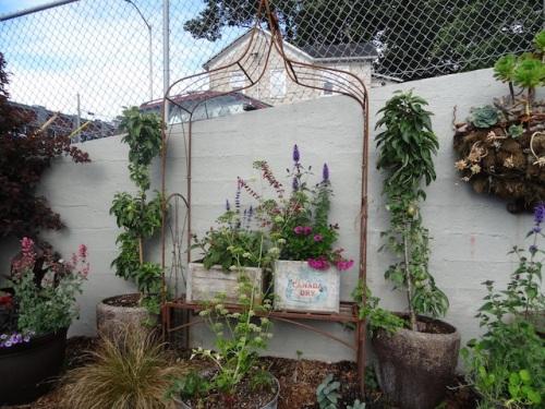 the garden outside