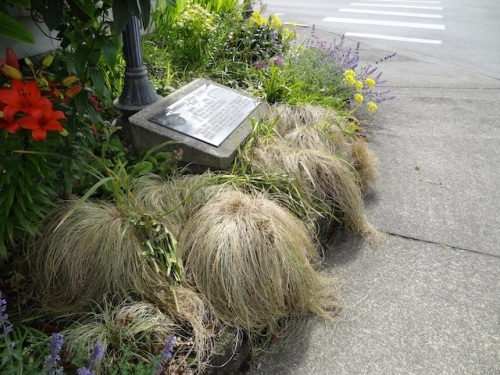 "I noticed this ""weeping love grass"" looked utterly decrepit."