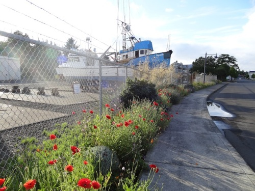 boatyard garden