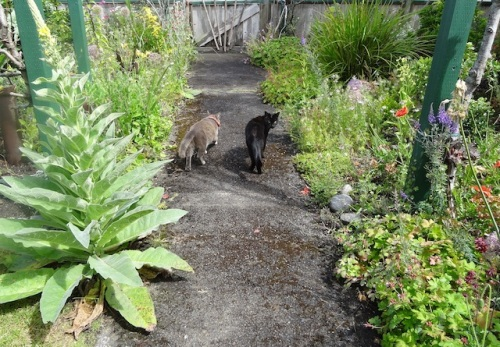 Smokey and our neighbour, Onyx