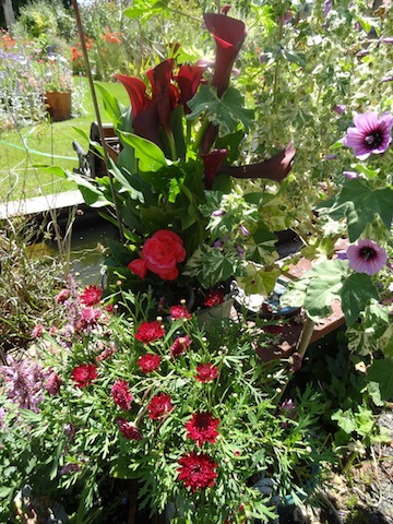 red flowers stacked up