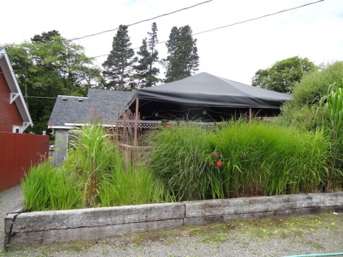 success: ornamental grasses enclosing both the east and south side of the dining deck