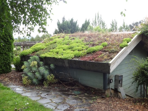 nearby: an eco roof
