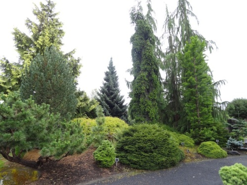 The Conifer Garden. We had heard this was the best thing. And it was.