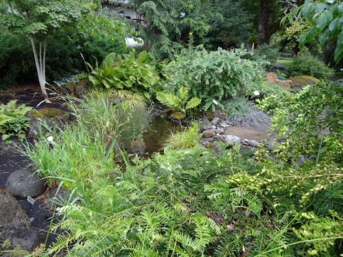 The Pet Friendly Garden has a naturalistic (or maybe it is natural!) stream.