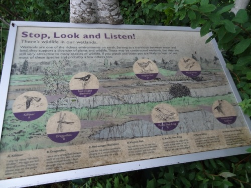 birdwatching info by the wetlands trails