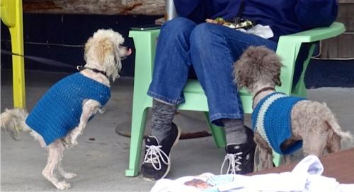 Saturday Market begging (Allan's photo)