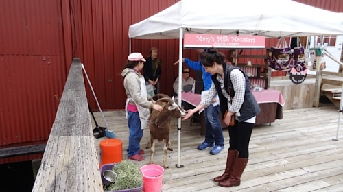 a popular goat
