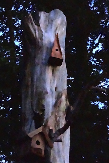 Allan's photo: birdhouses after dark