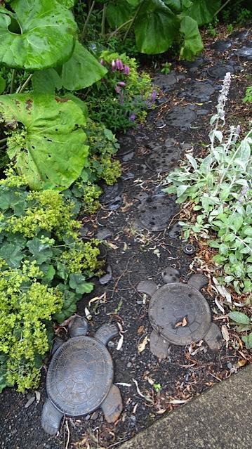 turtle path