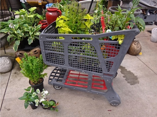 a haul of plants for my garden (Allan's photo)