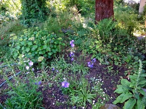 Allan's photo: back garden