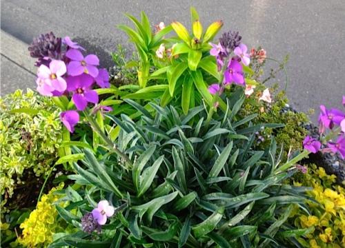 an Ilwaco planter (Allan's photo)
