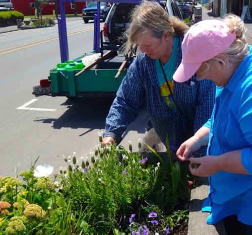 Debbie and I deadheading a lavender prior to a photo