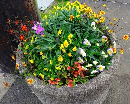 Ilwaco planter (Allan's photo)