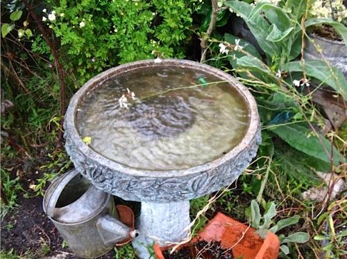 greenhouse birdbath (Allan's photo)