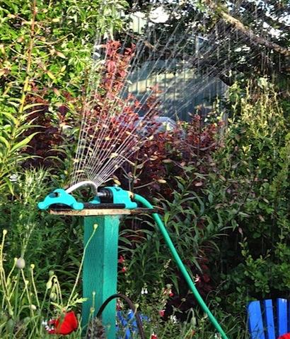 at home: Allan got the broken sprinkler replaced.